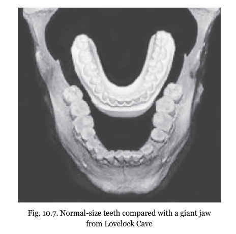 Lovelock Giant Skull - Jaw Comparison