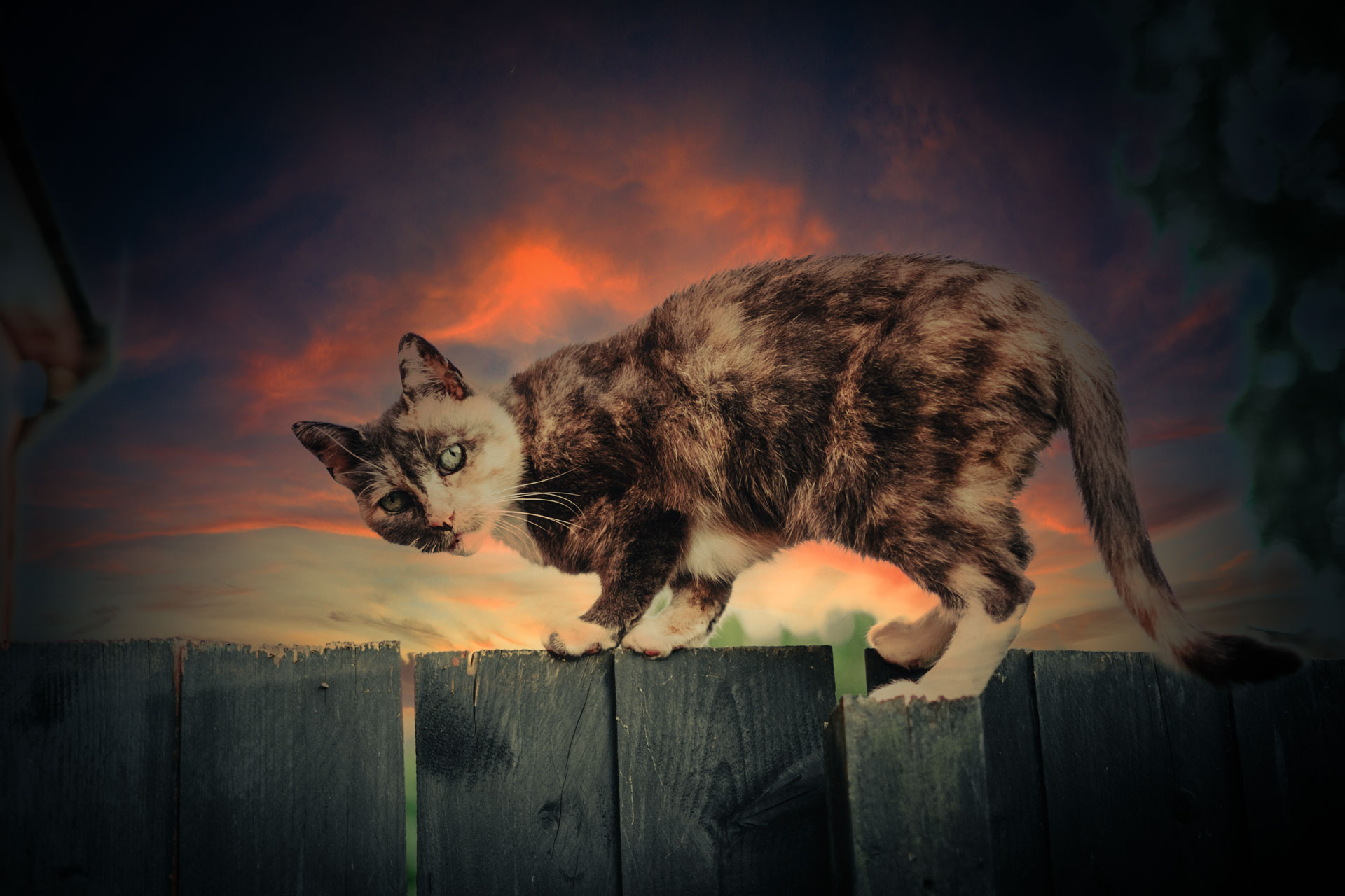 The Last Meow